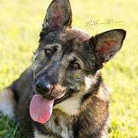 Adopt A Pet :: Uliana - Greeneville, TN
