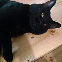 Adopt A Pet :: Zachary - Colville, WA