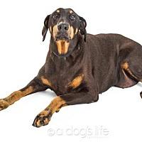 Adopt A Pet :: Roxanne - Tempe, AZ
