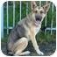 Photo 2 - German Shepherd Dog Dog for adoption in Los Angeles, California - Stella von Bremen