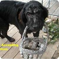 Adopt A Pet :: Rosie - Adoption Pending - Lee's Summit, MO
