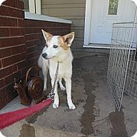 Adopt A Pet :: Coco - Cincinnati, OH