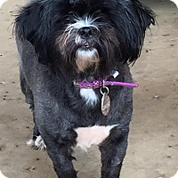 Adopt A Pet :: LANDREE - Fort Worth, TX