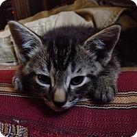 Adopt A Pet :: Willow - Piscataway, NJ