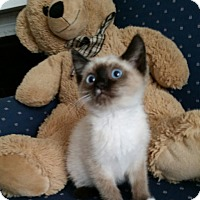 Adopt A Pet :: Speckle - Davis, CA