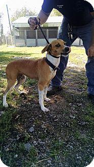 Terrier (Unknown Type, Medium) Mix Dog for adoption in Mt. Vernon, Illinois - Reecie