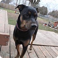 Adopt A Pet :: Jessie - Woodstock, ON