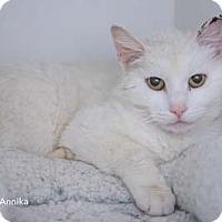 Adopt A Pet :: Annika - Merrifield, VA