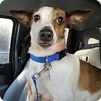 Adopt A Pet :: Widget - Gainesville, FL