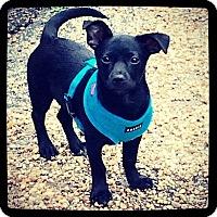 Adopt A Pet :: Corey aka Bugsy - Grand Bay, AL