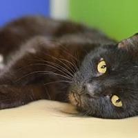 Adopt A Pet :: Beetle - Philadelphia, PA