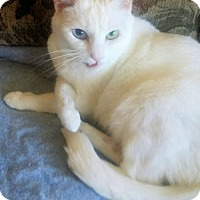 Adopt A Pet :: Whitey - Norristown, PA