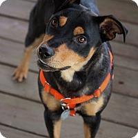 Adopt A Pet :: Mr. Smith
