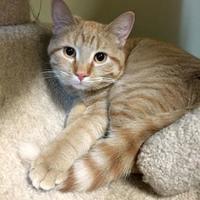 Adopt A Pet :: Pumpkin - Crossfield, AB