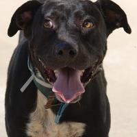 Adopt A Pet :: Bubba - Toccoa, GA