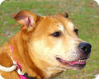 Shar Pei Mix Dog for adoption in Daytona Beach, Florida - Lexus