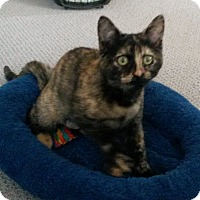 Adopt A Pet :: Amber - bloomfield, NJ