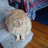 Adopt A Pet :: Tangerine - Central Islip, NY