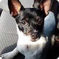 Adopt A Pet :: Trinket - Gainesville, FL