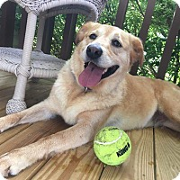 Adopt A Pet :: Mollie - Nashville, TN