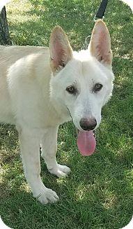 German Shepherd Dog Dog for adoption in Hagerstown, Maryland - Kaiser and Kikka