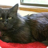 Adopt A Pet :: Chaco - Portland, OR
