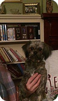 Pekingese Mix Dog for adoption in cleveland, Ohio - Maggie May and Baby girl
