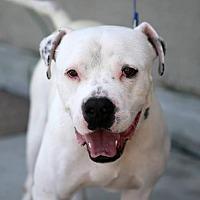 Adopt A Pet :: Anton - San Diego, CA