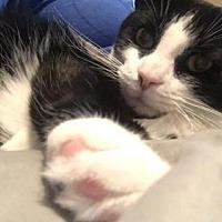 Adopt A Pet :: Minny - Cincinnati, OH