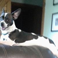 Adopt A Pet :: Rico - Ardmore, OK