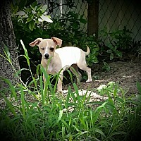 Adopt A Pet :: Wynnie - Weeki Wachee, FL
