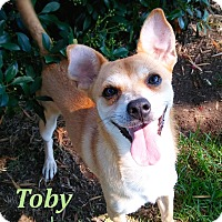 Adopt A Pet :: Toby - El Cajon, CA