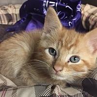 Adopt A Pet :: Robb - Moody, AL