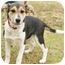 Photo 4 - Corgi/Beagle Mix Puppy for adoption in Westport, Connecticut - *Angela - PENDING