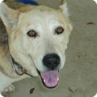 Adopt A Pet :: Silky - Pointblank, TX