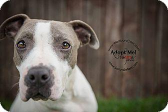 Terrier (Unknown Type, Medium) Mix Dog for adoption in Houston, Texas - Bosco