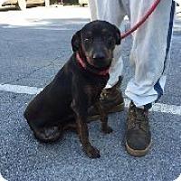 Adopt A Pet :: Marcus - richmond, VA