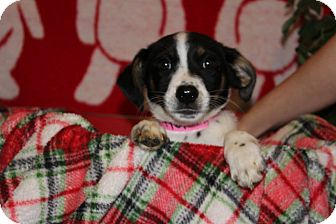 Husky Mix Puppy for adoption in Waldorf, Maryland - Charlotte