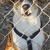 Adopt A Pet :: Aarow - Pipe Creek, TX