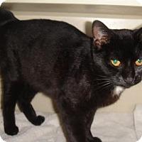 Adopt A Pet :: Magpie - Ridgeland, SC