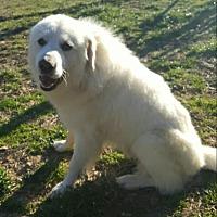 Adopt A Pet :: Charlie - London, KY