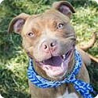 Adopt A Pet :: OLIVER (ECAS Kennel A3) - Pleasanton, CA