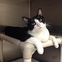 Adopt A Pet :: B-8 Cami - Triadelphia, WV