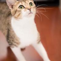 Adopt A Pet :: Terragon - Madison, GA