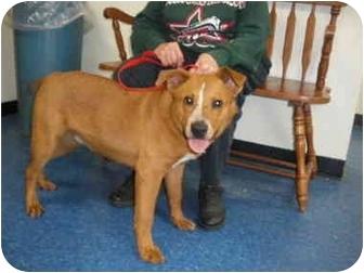 "Australian Shepherd/Australian Cattle Dog Mix Dog for adoption in MARION, Virginia - ""Riley"""