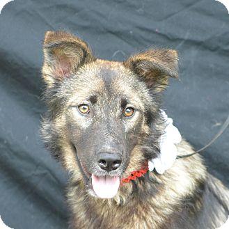 German Shepherd Dog Mix Dog for adoption in Plano, Texas - Lizzie