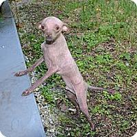 Adopt A Pet :: Jay - Miami, FL