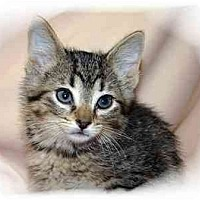 Adopt A Pet :: Lily - Montgomery, IL