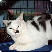 Adopt A Pet :: Tippet - Fort Lauderdale, FL