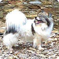 Adopt A Pet :: Ralphie - Charlottesville, VA